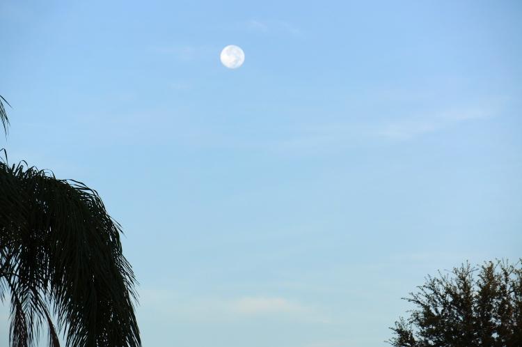Sarasota Morning Moon - 8/3/2012