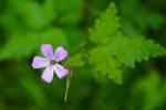 light lavender flower