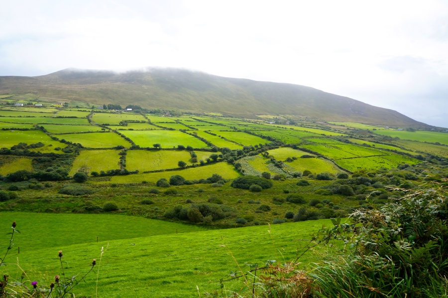 Dingle Peninsula farmland
