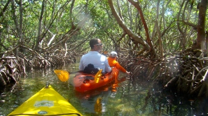 paddling among the mangroves