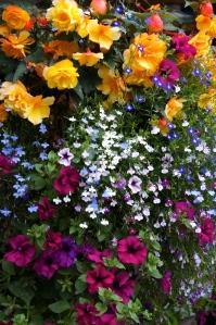 a few flowers