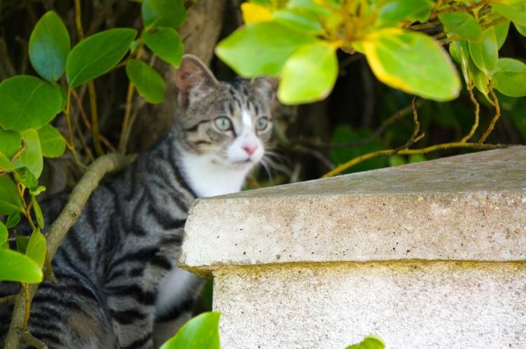 Howth kitten guarding the gate