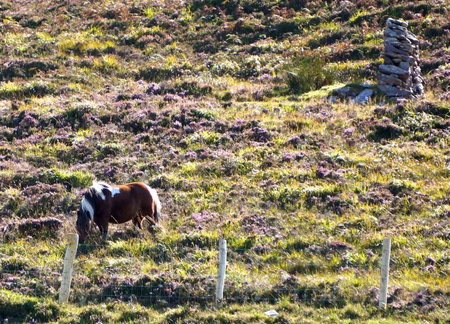 Kells horse