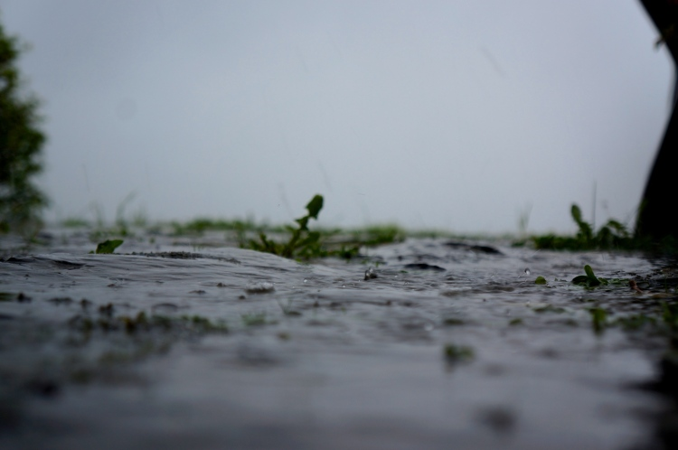 raindrops in the morning