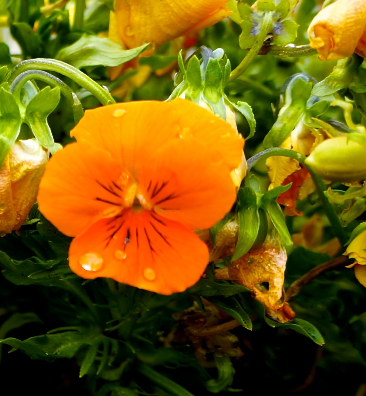 raindrops on the flowers