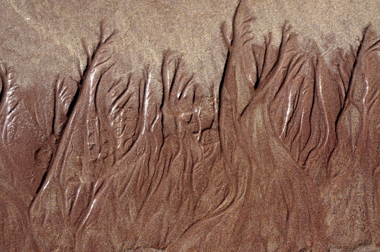 sand patterns from the tide's ebb