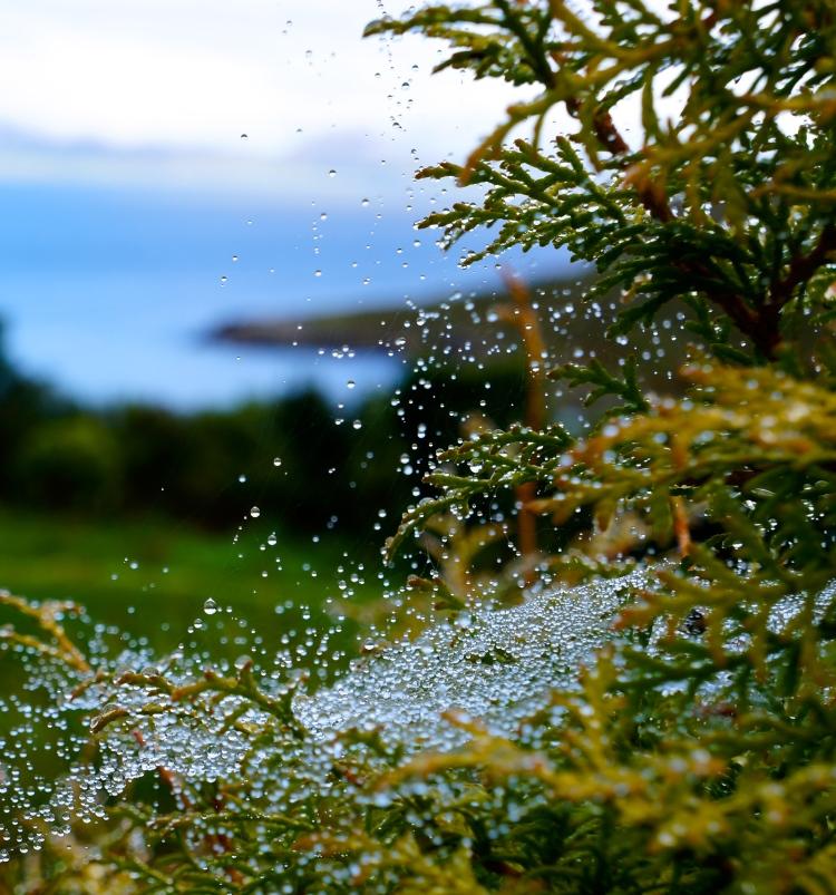 spider web with rain drops