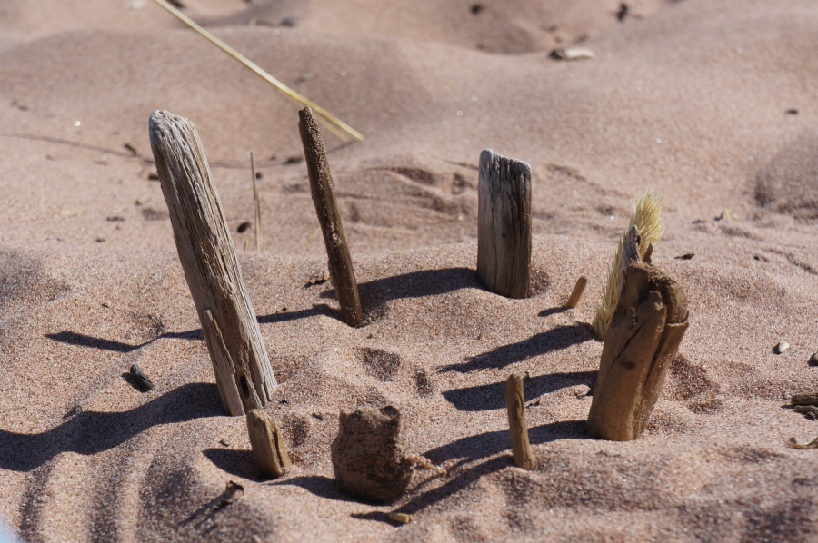 driftwood circle