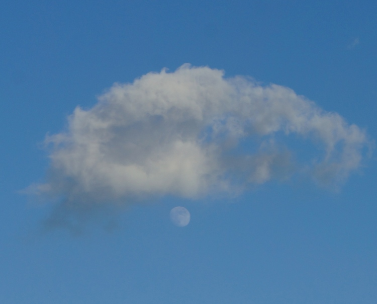the moon showing her almost fullness under a wee cloud