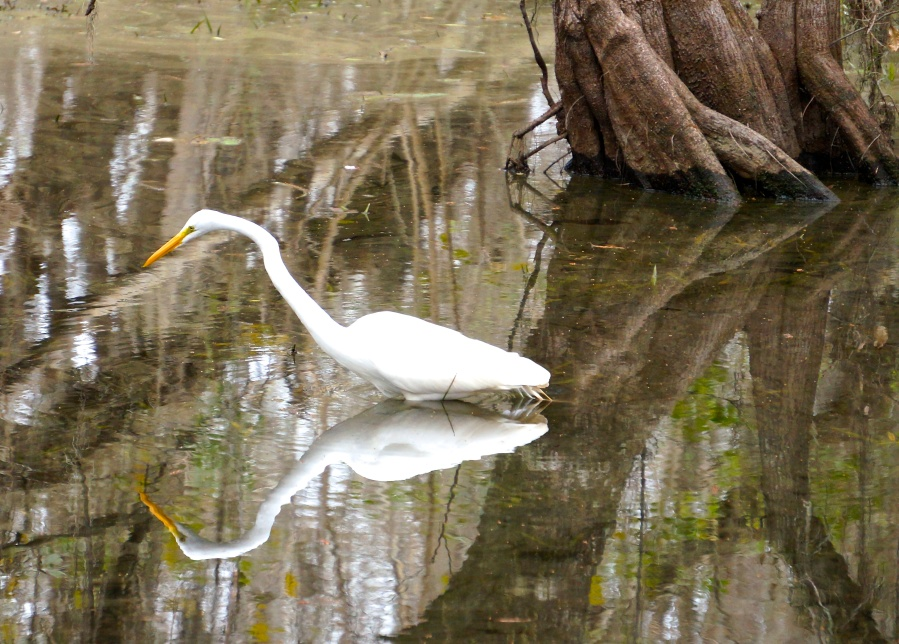 egret, the other way