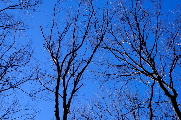 bright sun silvering the tree limbs - Cathead Trail - March 19, 2016.jpg